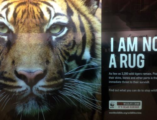 Stop Wildlife Crime. We need your help
